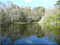 NS2209 : The larger of the Swinston Ponds, Culzean estate by Humphrey Bolton