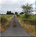 SO0864 : Entrance drive to Springfield Farm NE  of  Llandrindod Wells by Jaggery