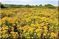 SJ2384 : Dawpool Nature Reserve by Jeff Buck