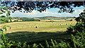 SO6524 : Barley straw bales and May Hill by Jonathan Billinger