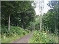 NT7855 : Path in Duns Castle Nature Reserve by M J Richardson