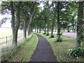 NZ2466 : Tree lined path beside Grandstand Road by JThomas