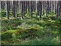 NH6356 : Summer in Bellton Wood by Julian Paren