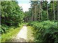 TQ2733 : Track, Tilgate Forest by Robin Webster