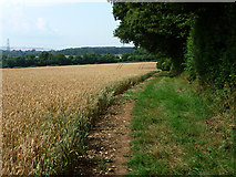 SU6514 : Farmland  beside Veniss Copse by Chris Gunns
