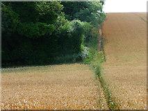 SU6514 : Monarch's Way footpath by Chris Gunns