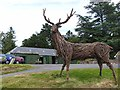 """NO5078 : """"Monarch of the Glen"""" by Oliver Dixon"""