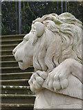 SK8932 : Lion's head by Alan Murray-Rust
