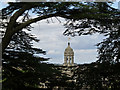 SK8932 : Cupola through the cedar tree by Alan Murray-Rust