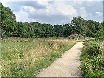 SJ8381 : Path Across Lindow common by David Dixon
