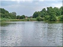 SJ8381 : Black Lake, Lindow Common by David Dixon