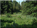 SU9941 : Winkworth Arboretum wetlands by Alan Hunt