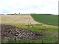NO4159 : Muck heap and barley field at Newton of Inshewan Farm by Oliver Dixon