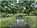 SP2556 : Charlecote Park, River Dene by David Dixon