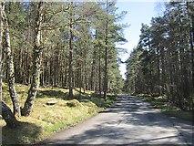 NH9718 : Minor road, Abernethy Forest by Richard Webb