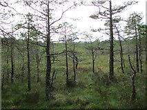 NH9817 : Abernethy Forest by Jennifer Jones