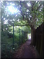 TQ2088 : Tree growing on the path between Valley Drive and Slough Lane by David Howard