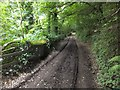 SX4764 : A small wall by the track through Whittacliffe Wood by David Smith