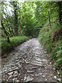SX4664 : A well surfaced section of the track through Whittacliffe Wood by David Smith