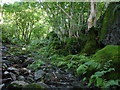 SD2094 : Track near Low Wood Duddon Valley by Andy Deacon