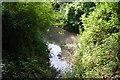 TL4654 : Springs at Nine Wells by Sandy B