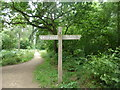 TF0820 : Signpost in the woods by Bob Harvey