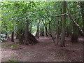 TF0820 : Dens in Bourne Woods by Bob Harvey