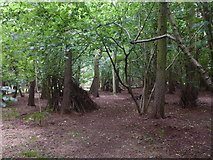 TF0820 : Dens in Bourne Woods by Bob Harvey
