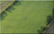 NO2426 : Sheep in a field east of Rait, from the air by Mike Pennington