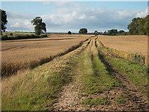 SE7287 : Ings Balk near Appleton-le-Moors by Colin Grice