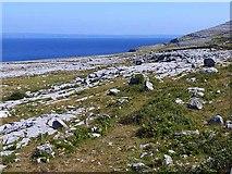 M1410 : Limestone pavement south of Black Head by Oliver Dixon