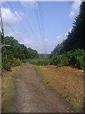 TQ1362 : Cleared area for pylons on Esher Common by David Howard