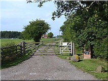 NZ3510 : Driveway to Hill House Farm by Oliver Dixon