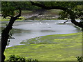 SN0107 : Swans on Garron Pill by David Medcalf