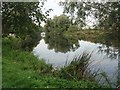 TL1351 : Great Ouse near Willington by David Leeming