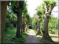 TQ0451 : Lime Avenue, Clandon Park by Paul Gillett