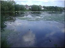 TQ2187 : The Welsh Harp reservoir, West Hendon by David Howard