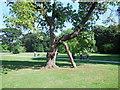 TQ0651 : Tree at Hatchlands Park by Paul Gillett