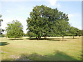 TQ0652 : Little and Large, trees in Hatchland Park by Paul Gillett