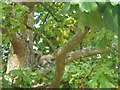 TQ5838 : Grey squirrel in The Grove by Barbara Carr