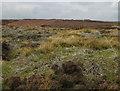 SE7194 : Moorland near Bank Top by Pauline E
