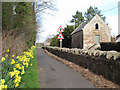 NT9355 : Daffodils at Foulden  by Stephen Craven