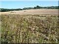 TR0751 : Farm activity near East Stour Farm by Marathon