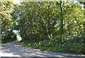 SW3925 : Roadside wooded area by Elizabeth Scott