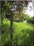 SS8827 : Oldway Road by Derek Harper