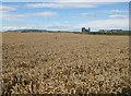 NZ9111 : Clifftop crop by Pauline E