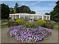 SK5339 : Camellia House and petunias, Wollaton Hall by David Hawgood