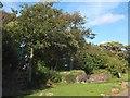 SS2824 : Stone walls and trees at Hescott Farm by David Smith