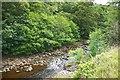 NZ0712 : The River Greta by Paul Buckingham