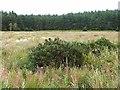 NY1265 : Priestside Flow Plantation by Oliver Dixon
